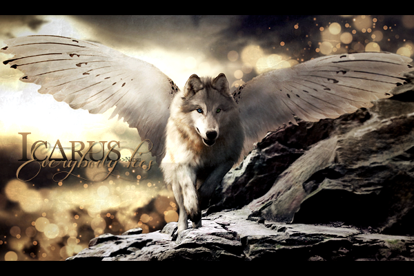 Graphisme forum Icarus_signa_by_phoeniciands-d8p0ukx