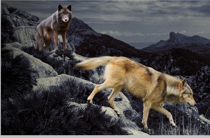 Tutoriel de photomanipulation Step_18_by_phoeniciands-d8q03q1