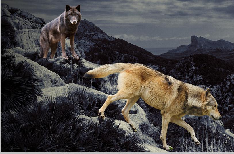 Tutoriel de photomanipulation Step_7_by_phoeniciands-d8q03s8