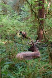 Elk Brothers