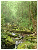 Green and Mossy by kessalia