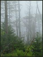Foggy Mountaintop by kessalia