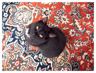 Cat and Carpet by Siril