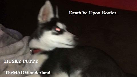 Izaya - Husky - Link : Bottle Death Video by WonderlandTrades