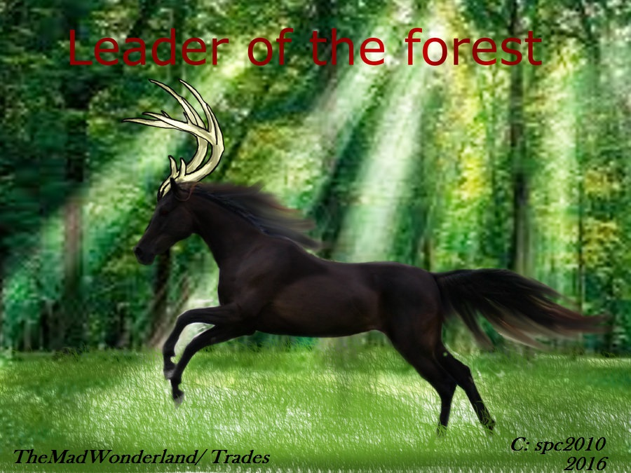 Antlered-Horse (Photomanipulation) Disclaimer by WonderlandTrades