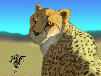 Cheetah for practice