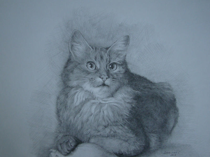 A pussy cat by Yakhovskaya