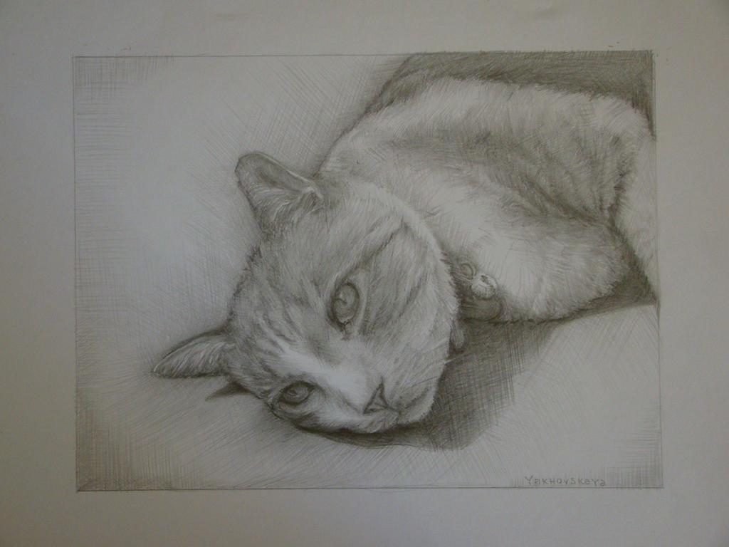 A cat by Yakhovskaya