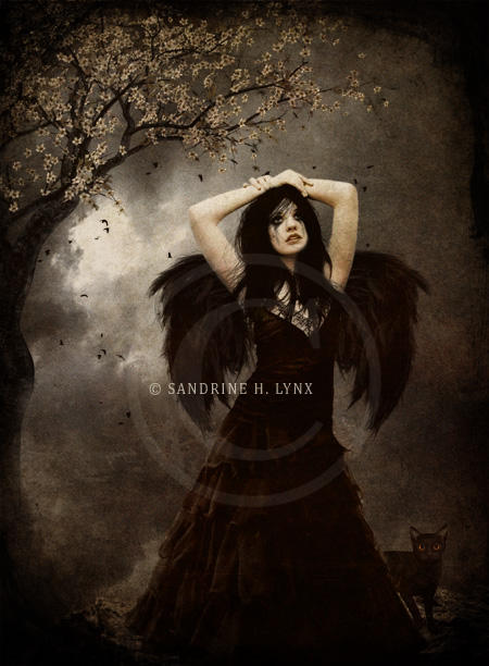 - The Dark Angel -