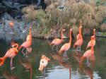 Flamingo Invasion II
