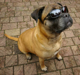Incredibly Shrinked Dog by Big-Diddy