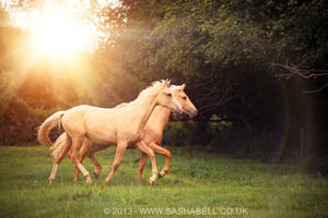 Two Palomino Horses by thesashabell