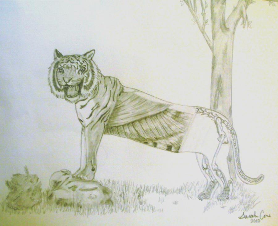 Tiger Anatomy By Sarahfiction On Deviantart
