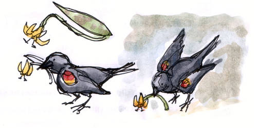 Blackbird and Lily by angelac