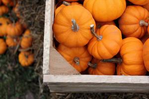 autumn days by LifeLookedEasyOnTV