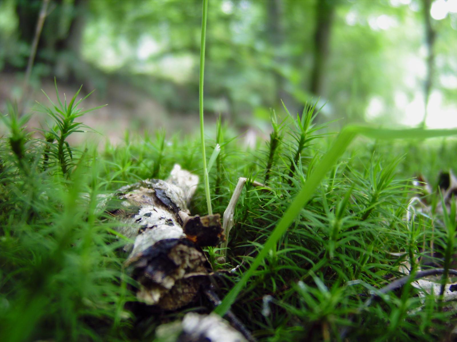forest floor beauty by Paul774 on deviantART