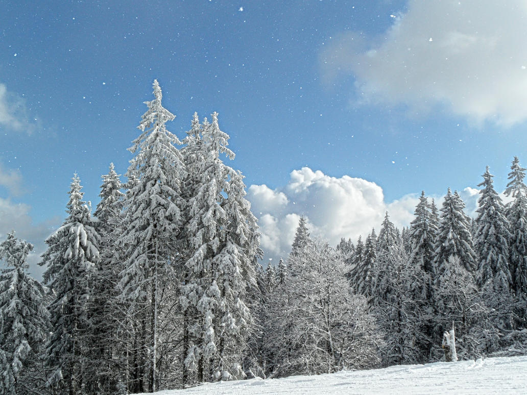 winter by Paul774