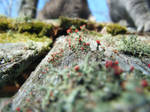 Red and Green Moss