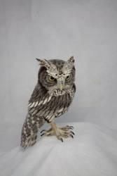 Western screech owl by kiyoshimino