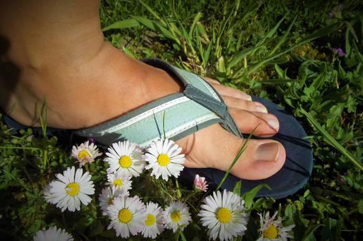 daisy toes 2