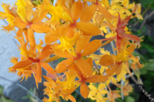 spring flowers - 2nd set