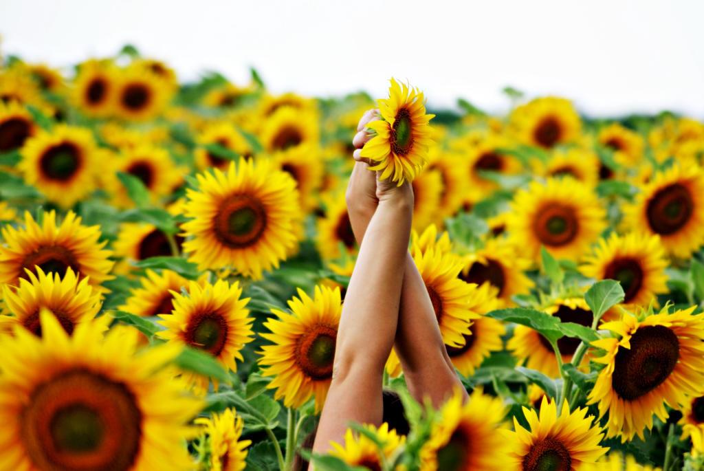 sunflowers by Galaayn