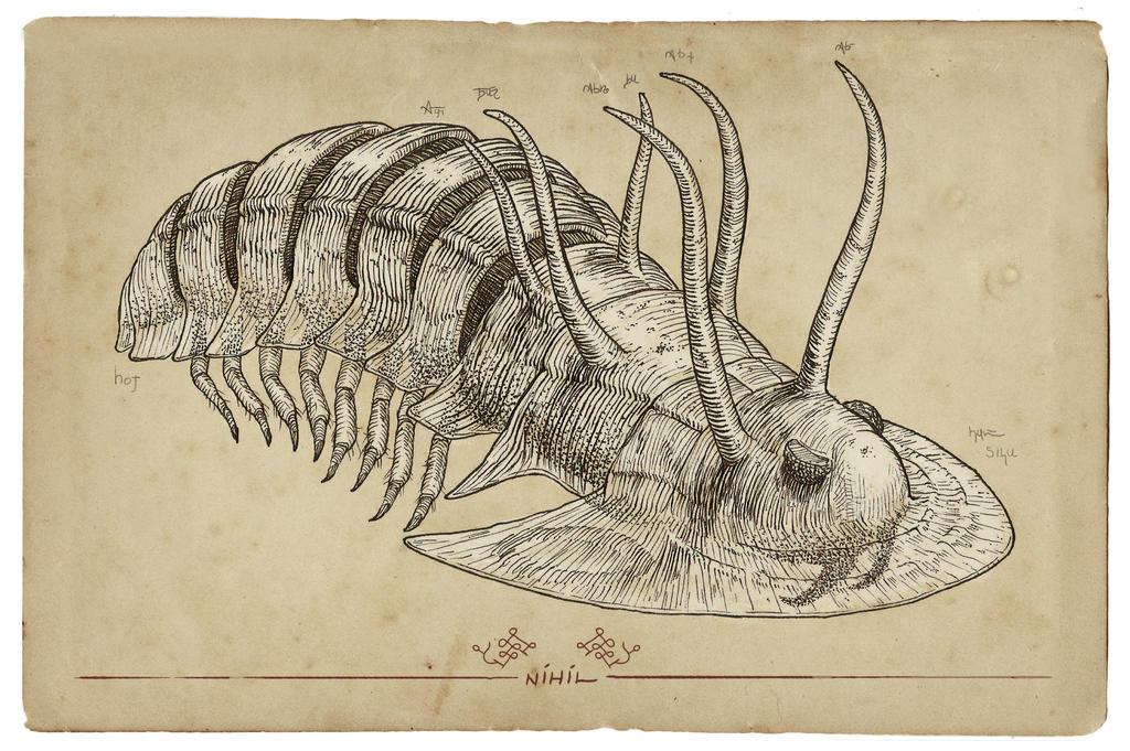 Pheronesis Cornura Aurens by Nihilustra