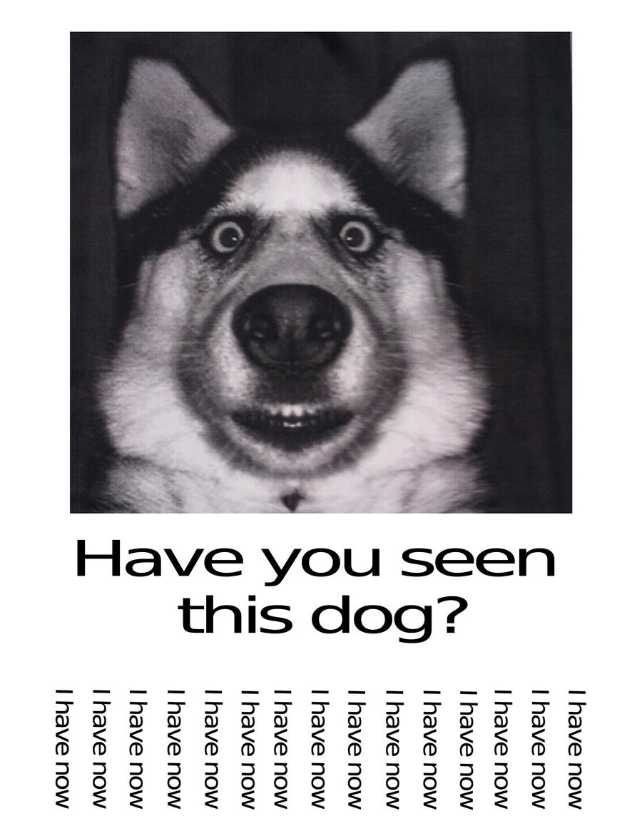Funniest Meme You Have Seen : Have you seen this dog by danelectrot on deviantart
