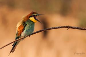 Angry bird by xBajnox