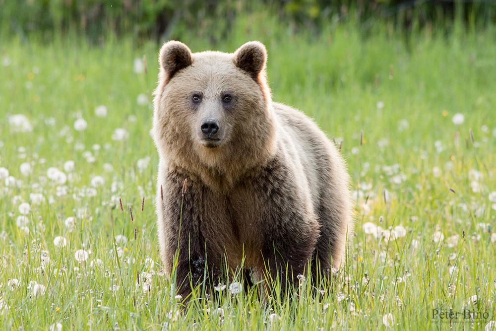 Image result for she bear