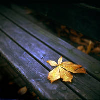 Autumn leaf on a bench by Xibalban