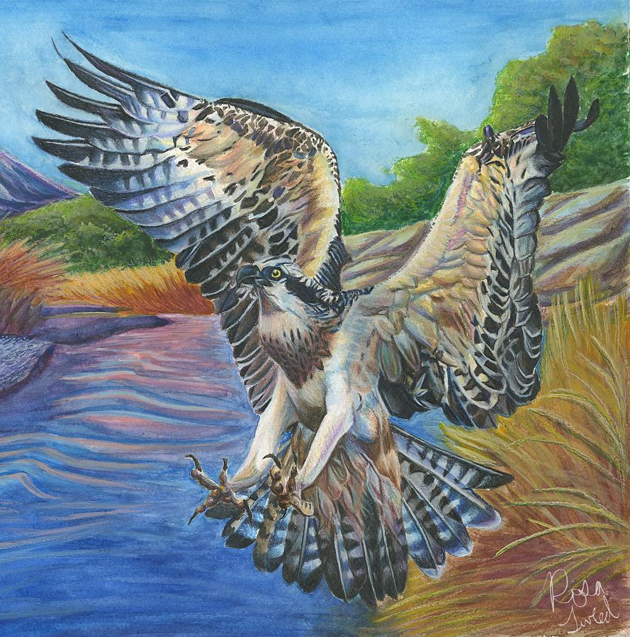 osprey_overhead_by_centaurii-d6npdde.png