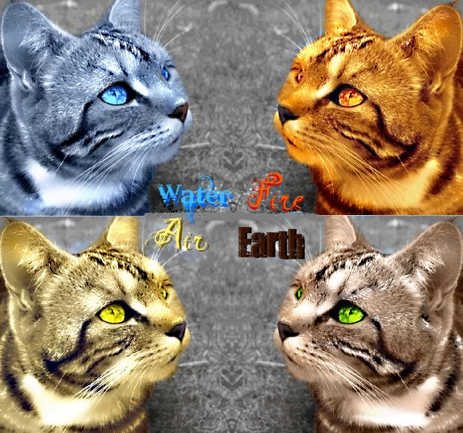 Has Starclan abandoned us?: Elemental Warrior Cats roleplay
