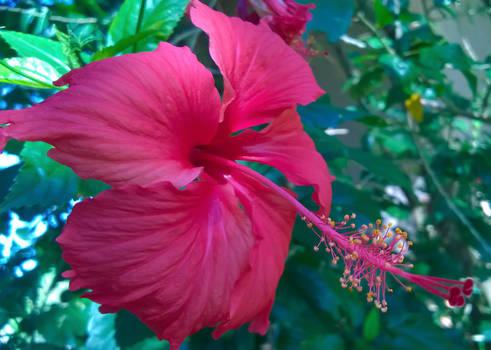 Red Smile Flower