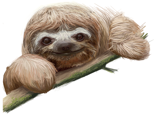 Baby Sloth By Xnienke On Deviantart