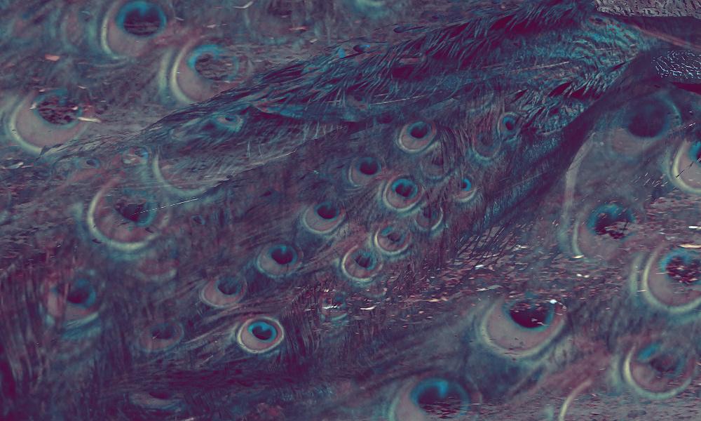 Texture 87 by xnienke