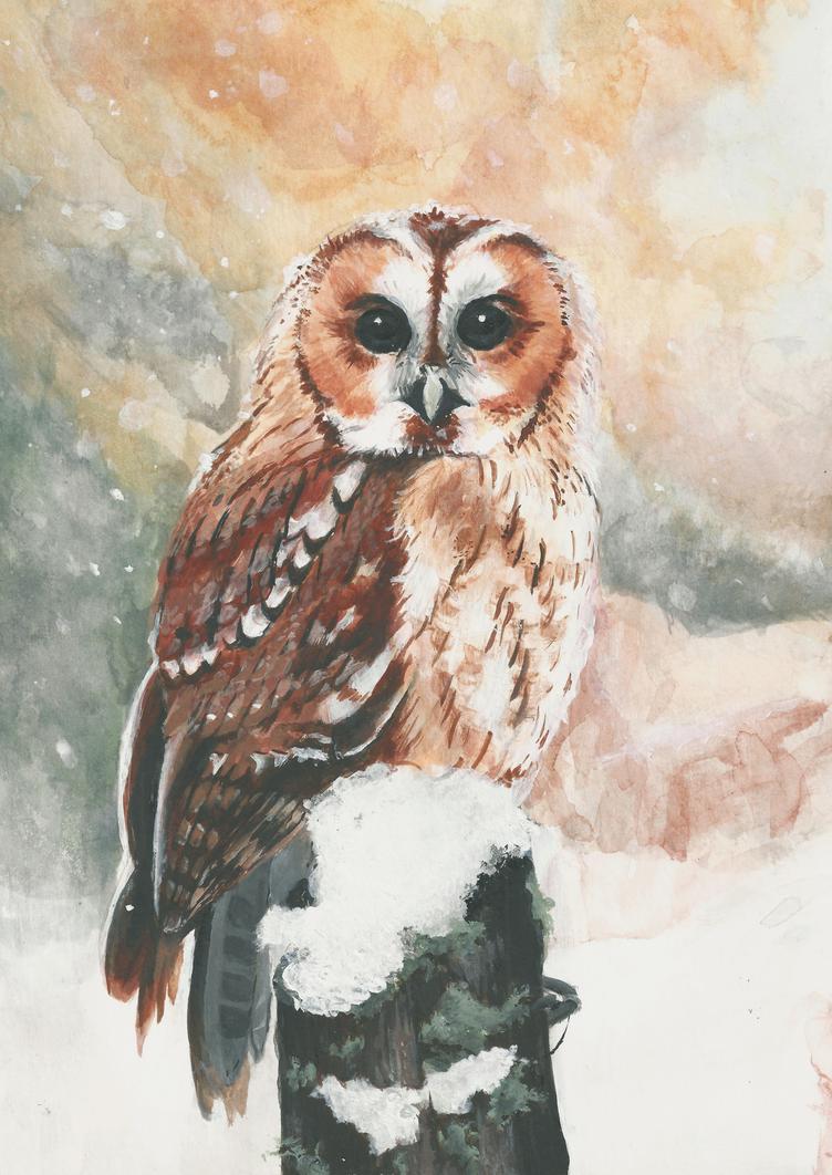 Owl by xnienke