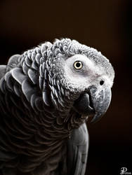 parrot 1 by Denis90