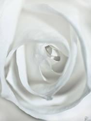 White Rose by Denis90