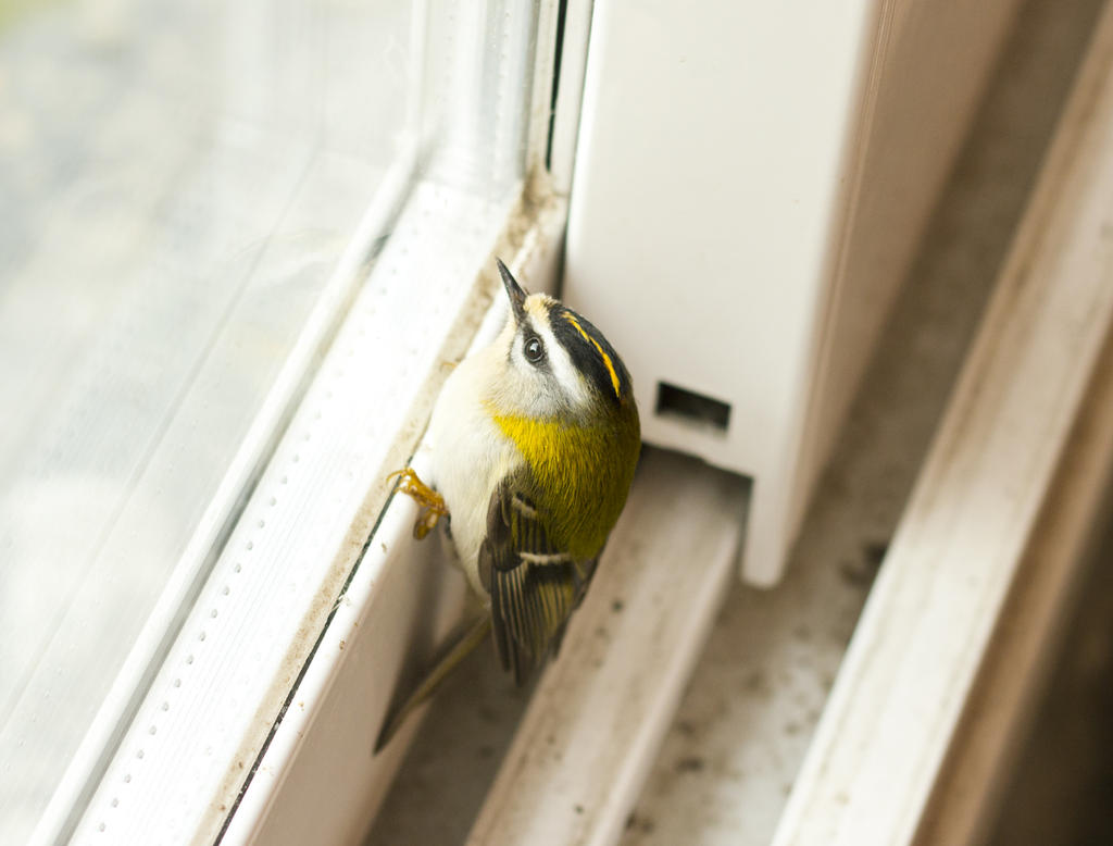 Little bird by sakgaa