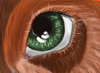bird's eye by erenance