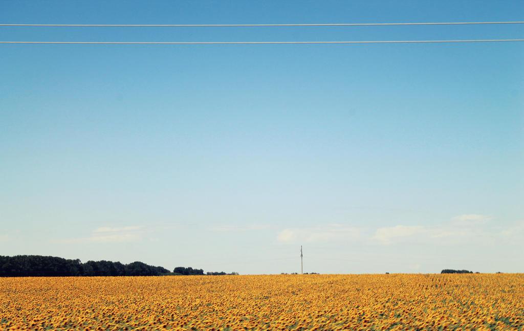 fields [2] by reita-tooru