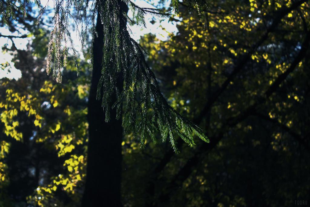 into the green by reita-tooru