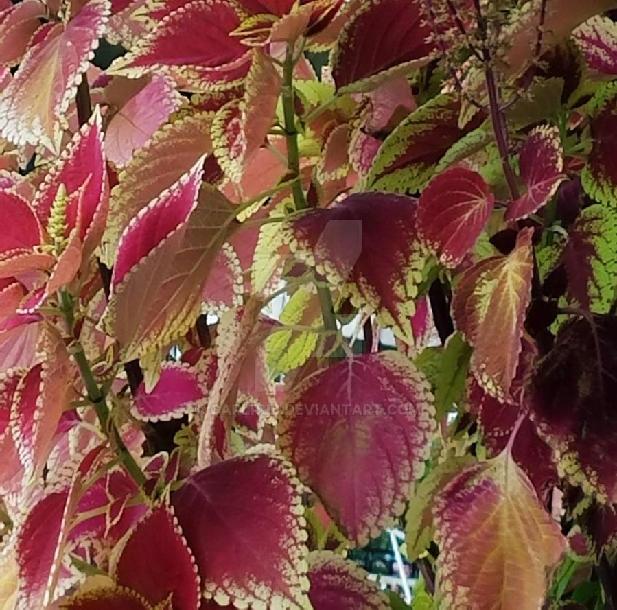 my plants  by carlrub
