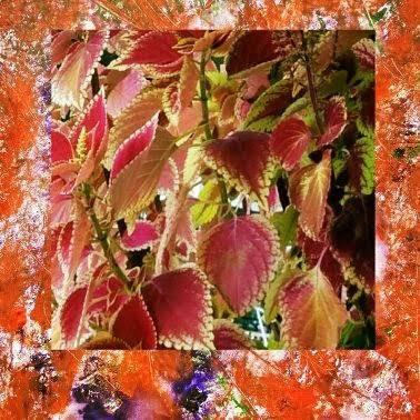 flower by carlrub