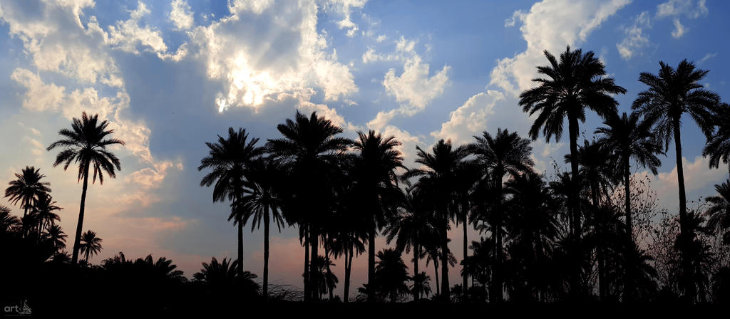 Al-Kufa palms by almahdi