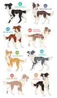Border Collies - ADOPTABLES AUCTION Closed