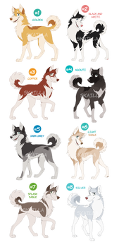 Husky Adoptable Auction - CLOSED!