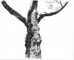 Tree Study  pen and ink by grobles63