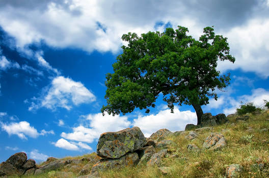 copac fara padure